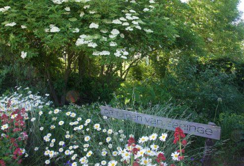 Tuin van de maand juli 2021: De Tuinen van Eeninge, Eenigenburg (NH)