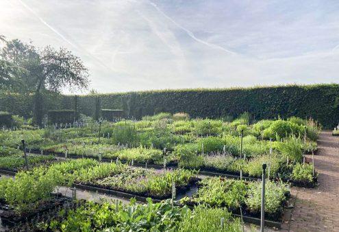 Tuin van de maand augustus 2021: Kwekerij De Hessenhof, Ede (Gld)