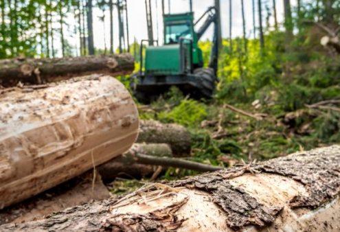Platform Groen Erfgoed – Bijltjesdag. Het vervangen van bomen in groen erfgoed