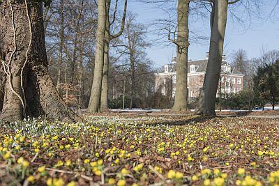 Digitale studiemiddag 'Stinzenplanten – bijzondere voorjaarsplanten onder een Friese naam'